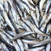 Is vis gezond?