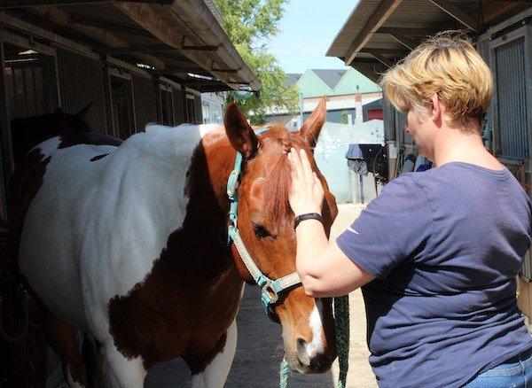 Help! Mijn paard slaat met het achterbeen, connectie, Anita Janssen