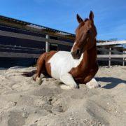 wat heeft mijn paard, Oogvoorhetpaard, American Paint Horse, Anita janssen,
