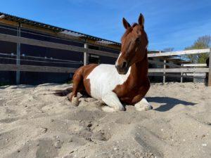Wat is welzijn voor het paard, Oogvoorhetpaard, American Paint Horse, Anita janssen,