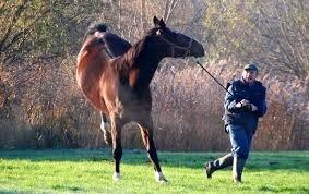 paard bestraffen of knuffelen, connectie, oog voor het paard