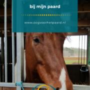 paard met lyme, teek, oog voor het paard