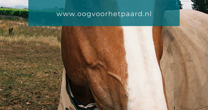 paard bijt dekens stuk, oog voor het paard, anita janssen
