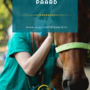 Wat is welzijn voor het paard, oog voor het paard, anita janssen, connectie, connectiesessie